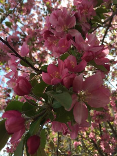 Hello beautiful Spring